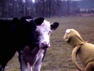 Kermit cows Frawley camera test